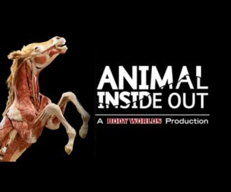Body Worlds Animal Inside Out