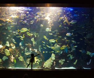Entradas aquarium donostia san sebasti n for Precio entrada aquarium