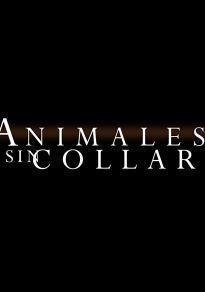 Cartel de la película Animales sin collar