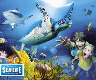 Sea Life Benalmadena-background